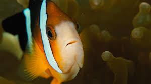fish bioinformatics r u0026d