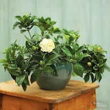 Fragrant Indoor Plants Low Light - 424 best striking house plants images on pinterest plants
