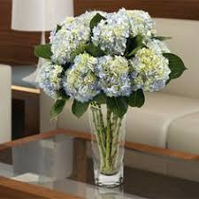 bulk hydrangeas hydrangea center pieces at port royal club house floral