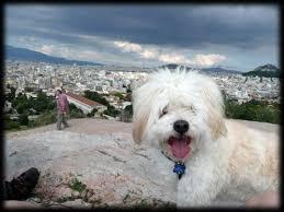 Spindrift Comfort Collar Comfortable Dog Collars Buying Online Eu Uk Dogcollar Ask