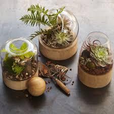 fit for a gnome tips to make your own terrarium garden design