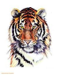best designs tiger