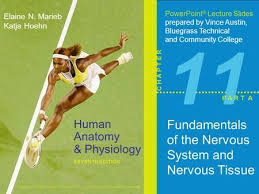 Fundamentals Of Anatomy And Physiology 9th Edition Download 11 Fundamentals Of The Nervous System And Nervous Tissue Revised