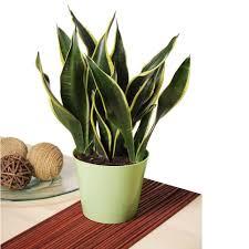 home design best indoor plants unexpected houseplants to