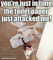 Toilet Paper Funny 33 Best Cat U0027s And Toilet Roll Images On Pinterest Animals Funny