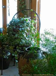 indoor eden simple verdant beauty u2026 twisting u0026 twining english ivy