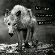 imagenes sorprendentes de lobos wolf black arctic abstract animal quotes howling wolf canis