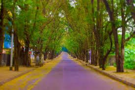 beautiful road at cbd sector 9