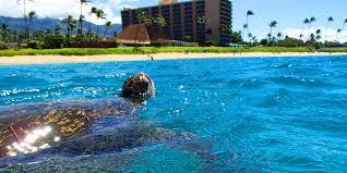 maui resort hotel royal lahaina resort on kaanapali beach maui