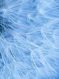 Blue Shades 1380 Best Beautiful Blues Images On Pinterest Color Blue