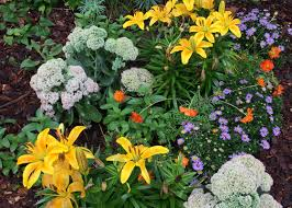 plant these 5 low maintenance perennials now garden club