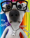 Are Dogs Color Blind? - Get the Facts! dog-paw-print.com