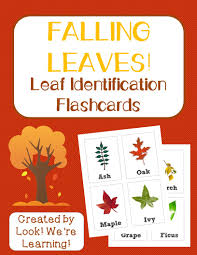 free printable flashcards leaf identification flashcards