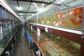 tropical fish manufacturers suppliers tropical fish catalog