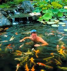 backyard ponds make fish keeping fun hometalk