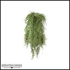 indoor vine plant 30in buckler fern green indoor nfr