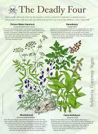 Poisonous Garden Flowers by Poisonous Plants Seldovia Gateway Signs