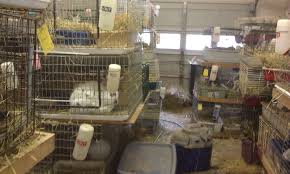 Stackable Rabbit Hutches Rabbits Rescued From Bunny Magic Wildlife U0026 Rabbit Rescue