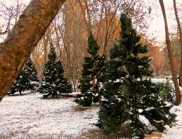 artificial christmas trees how do you measure 525600 minutes