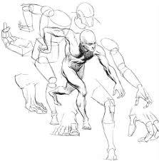 Human Anatomy Reference Luxury Human Figure Anatomy 25 For Your 3d Human Anatomy With