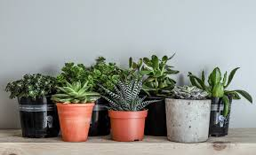 indoor plants that u0027ll survive without water