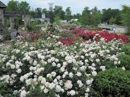 central virginia organic gardener lewis ginter botanical gardens