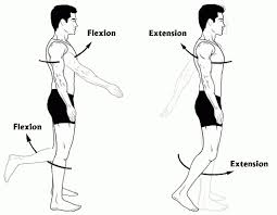 leg flexion and extension articles journal of neurophysiology
