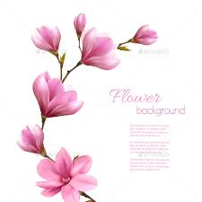 magnolia flowers flower background with blossom branch of pink magnolia by almoond