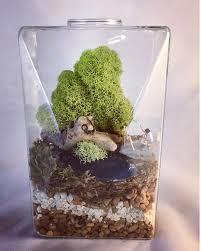 secret lives of faculty u2014 ashley weber tiny terrarium artist