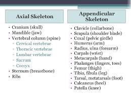 Human Anatomy And Physiology Notes Anatomy Physiology Lecture N Anatomy And Physiology 2 Lecture