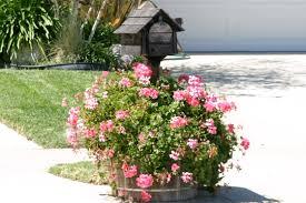 flowers going postal