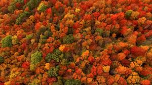 fall foliage turn red fiery depends
