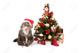 santa cat is dressing up in red christmas cap and sitting by
