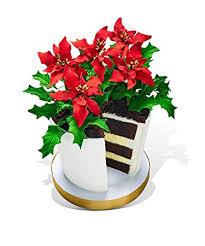 Pointsettia Amazon Com Poinsettia Flower Pot Cake Grocery U0026 Gourmet Food