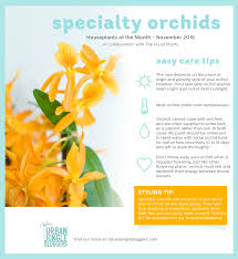 houseplant of the month november specialty orchids