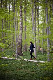 in the woods mindfulness in everyday a walk in the woods and return to
