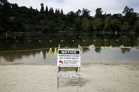 toxic algae kills 2 dogs after swim in napa county pond sfgate