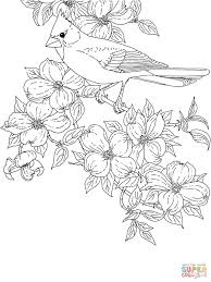 northern cardinal coloring pages free coloring pages