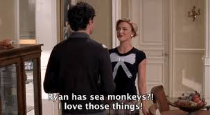the o c rewatch project seth cohen is the dorkiest womanizer