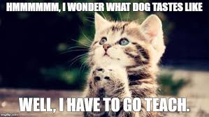 Funny Kitten Memes - cute kitten imgflip