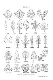 flower leaf template clip art on templates clipart library