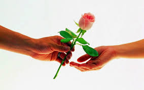 imagenes para enamorar con flores el secreto de la atraccion el amor y el lenguaje de las rosas para