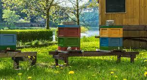 backyard beekeeping backyard ideas