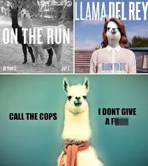 Arizona Memes - llamas running loose funny memes created by fans after animal