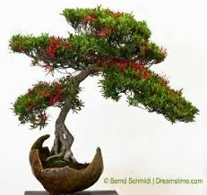 bonsai and blooms escape to the of living