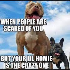Pitbull Meme - lol ko ndnbxr that s me an u misfits pits 4 life pinterest