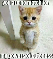 Romantic Memes - romantic meme top best romantic meme pictures collection