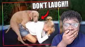 Winning Meme - this dog is winning try not to laugh or grin challenge dank meme