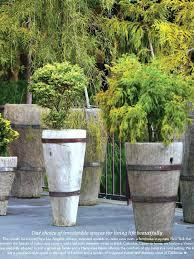 large tree pots instavite me