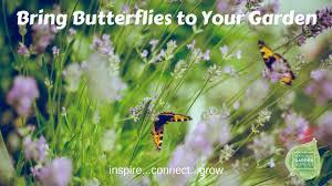 bring butterflies back to your garden national garden bureau